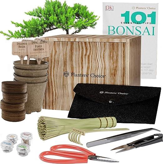 Kit de Iniciación de Bonsái Premium + Libro 101 Consejos ...