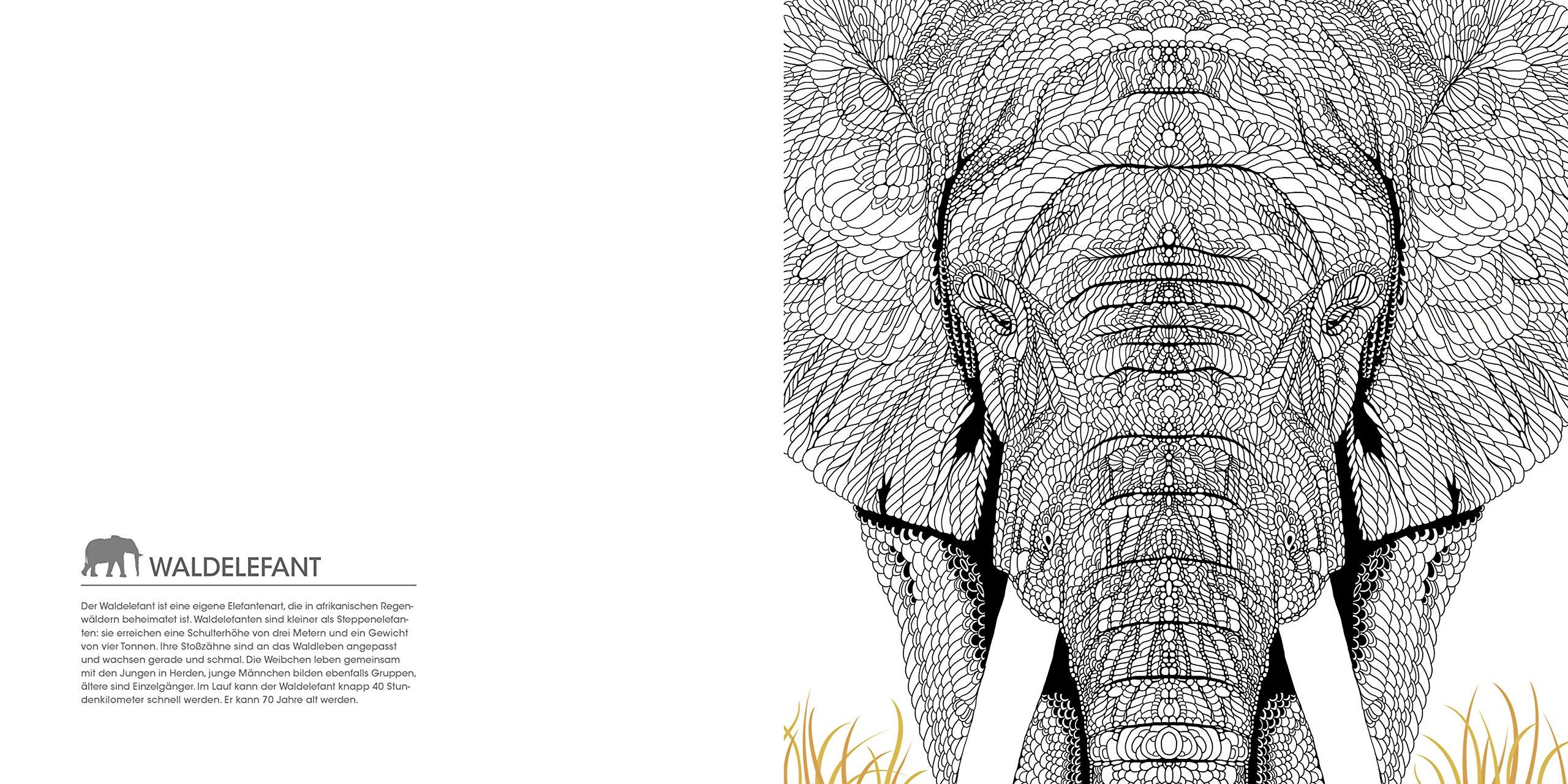 Faszination Tiere Ausmalen Und Staunen überraschendes Tierwissen