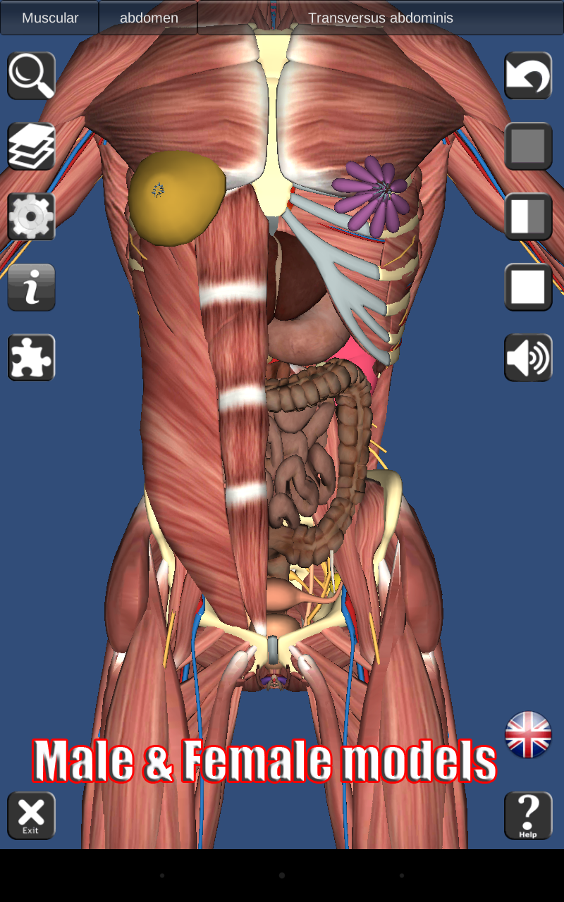 Amazon.com: 3D Human anatomy: Appstore for Android