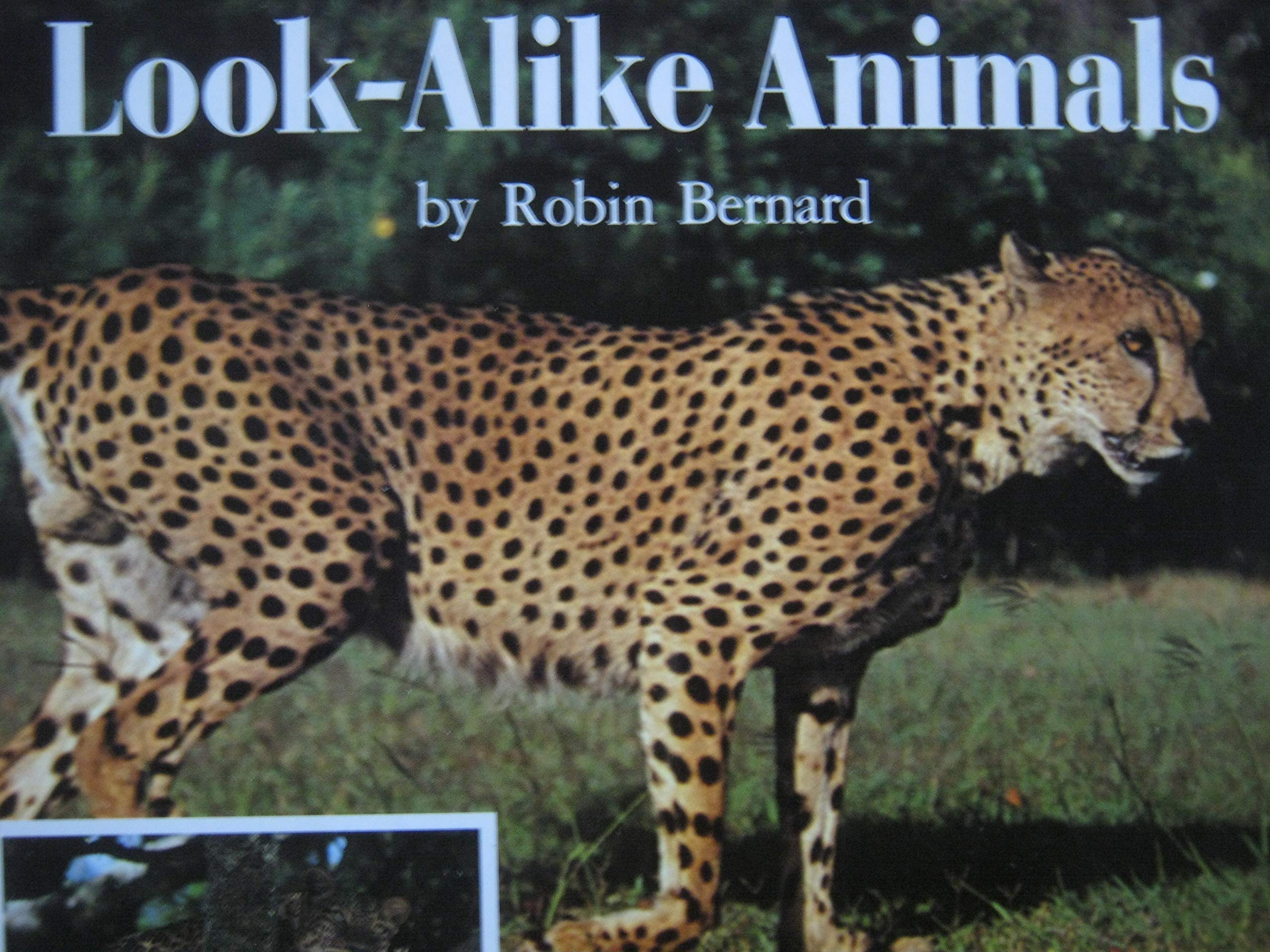 Look-Alike Animals: Robin Bernard: 9780590273886: Amazon.com: Books