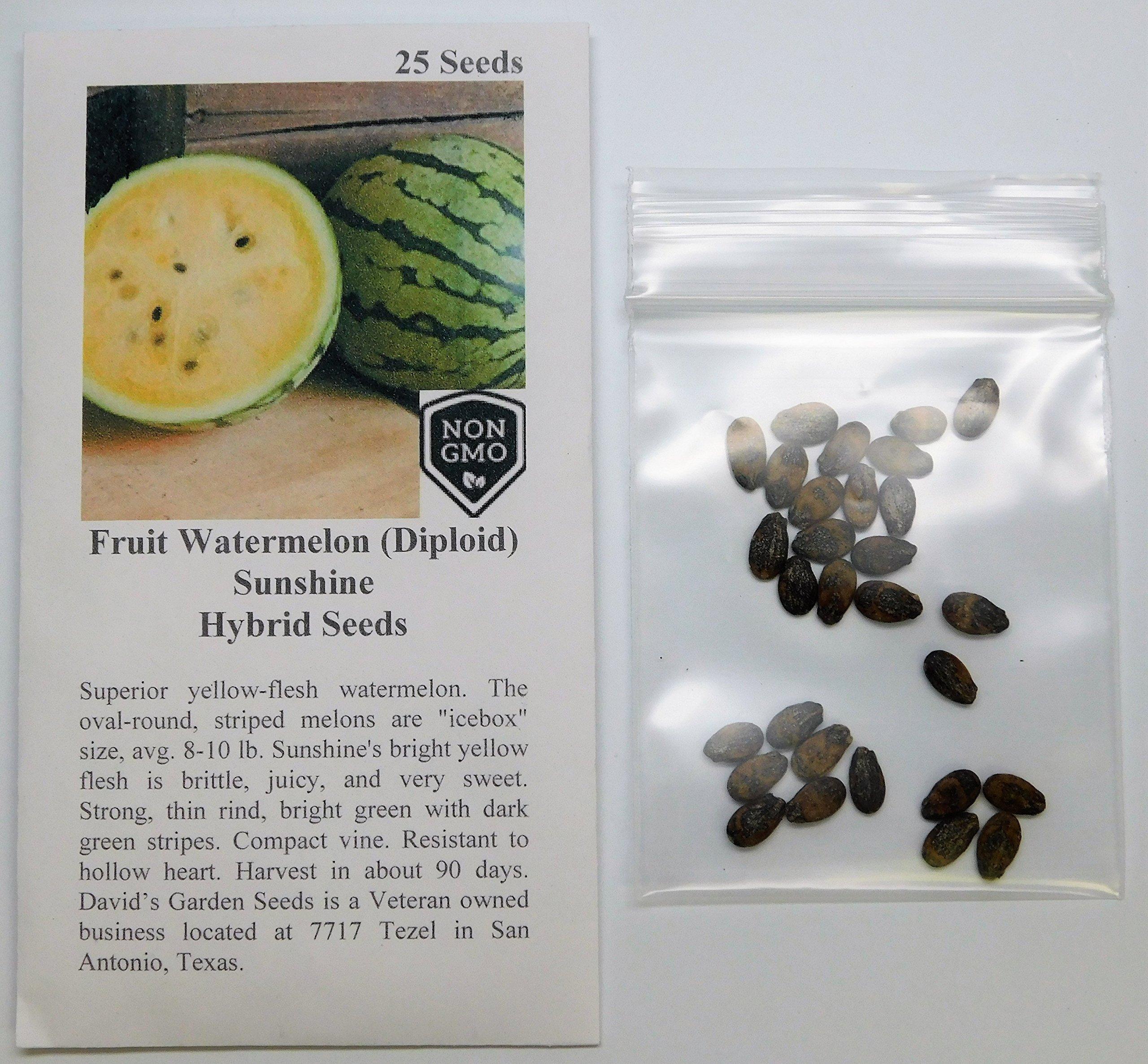 David's Garden Seeds Fruit Watermelon (Diploid) Sunshine AV0233 (Yellow) 25 Hybrid Seeds