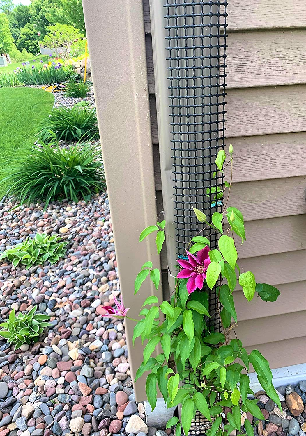 A Sleek, Narrow and Unobtrusive 9 Foot Tall Downspout Trellis to Make Your Gutter/Downspout Disappear (1 Trellis)