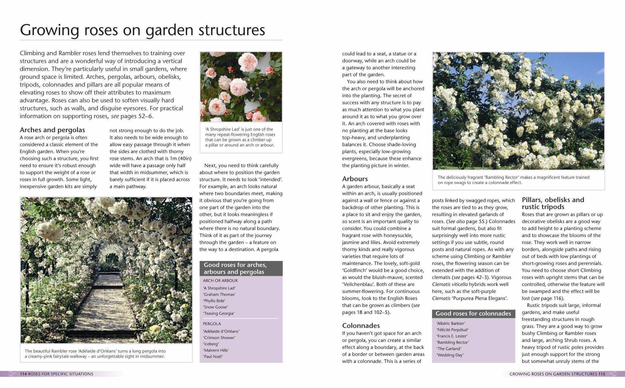 Alan Titchmarsh How to Garden: Growing Roses: Amazon.es ...