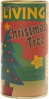 product image for The Jonsteen Company Living Christmas Tree   Seed Grow Kit