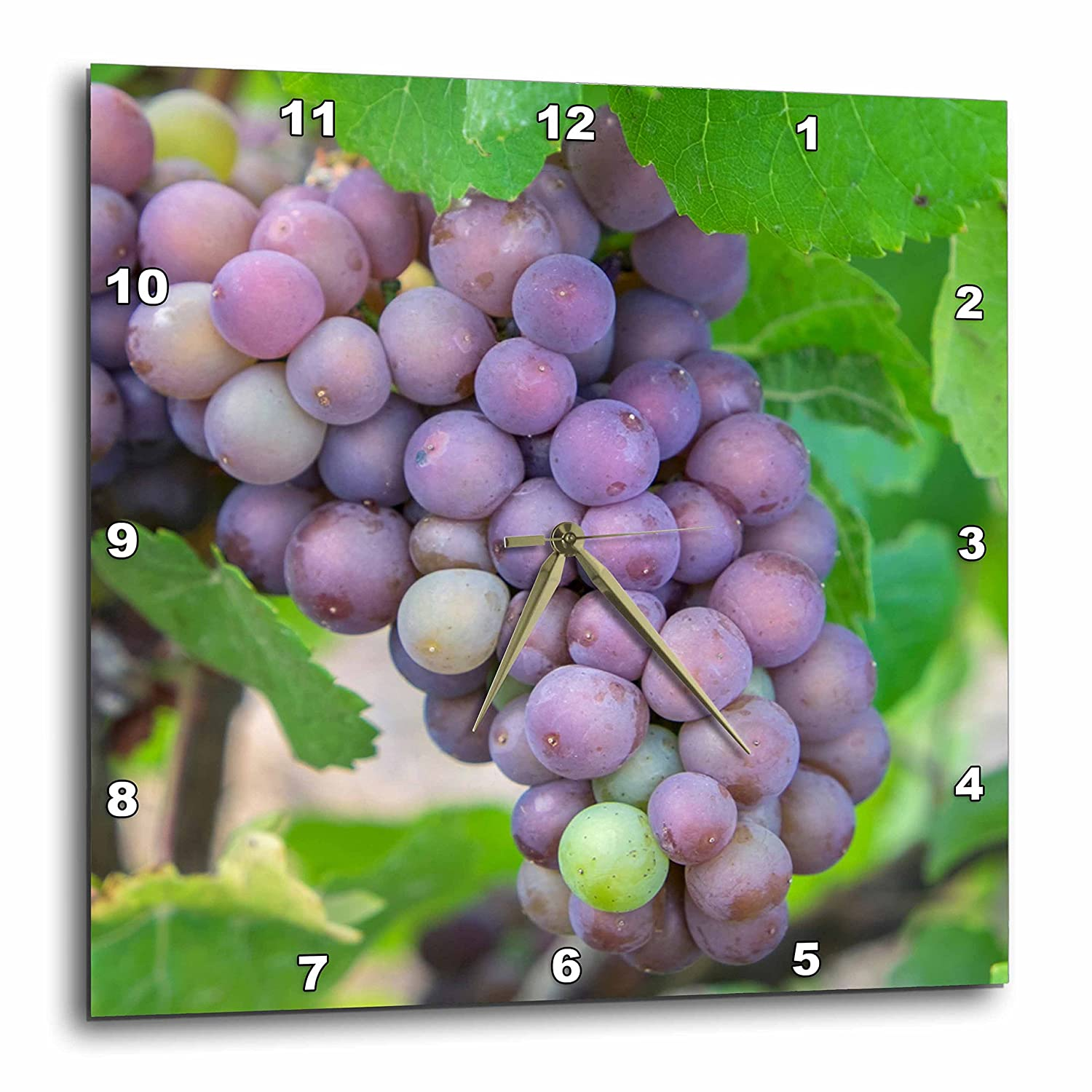 10x10 Wall Clock DPP/_279266/_1 USA 3dRose Danita Delimont Purple Wine Grapes On Vine New York Vineyards