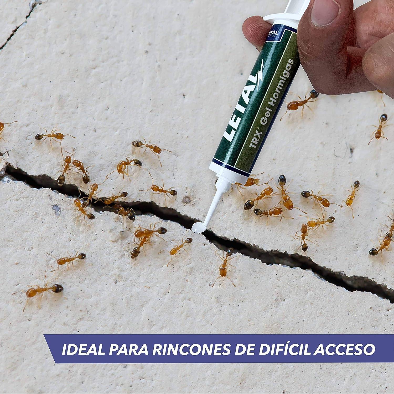 Letal TRX Gel Insecticida Hormigas - Cebo Mata Hormigas para Uso Doméstico de Zotal, Pack de 20 Gramos en Total. Elimina Colonias de Hormigas Que se ...