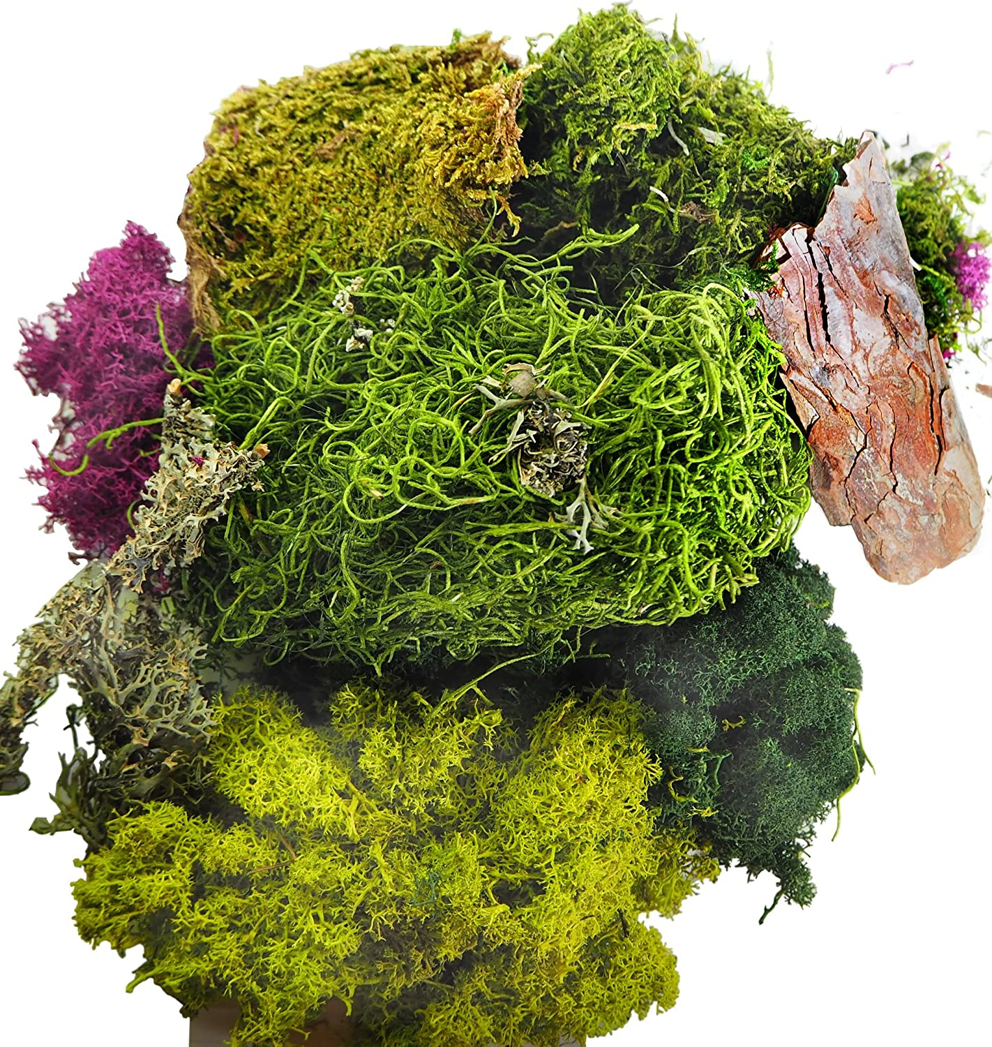 TerraGreen Creations Moss Fairy Garden and Succulent Terrarium Accent Pack - Several Moss Types - Bark - Mini Figures