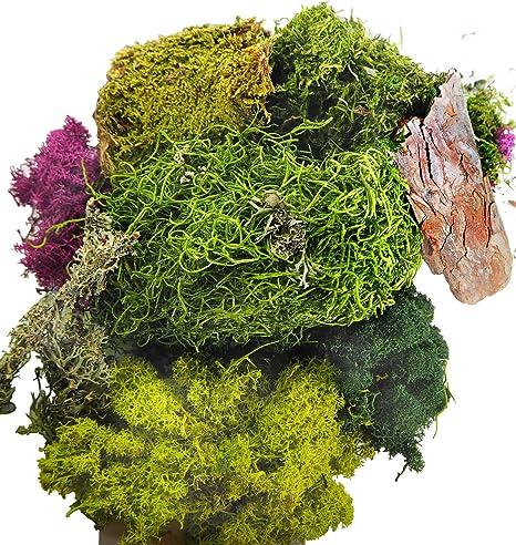 Amazon Com Terragreen Creations Moss Fairy Garden And Succulent