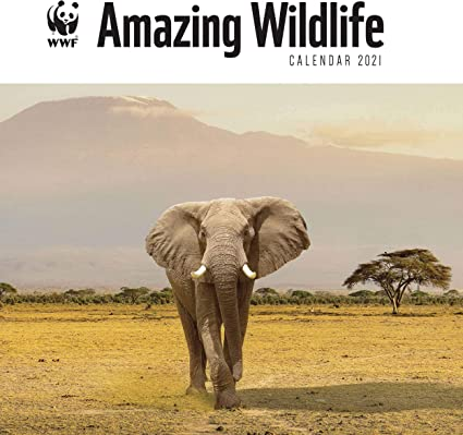 WWF, incroyable calendrier 2021: Amazon.fr: Fournitures de bureau