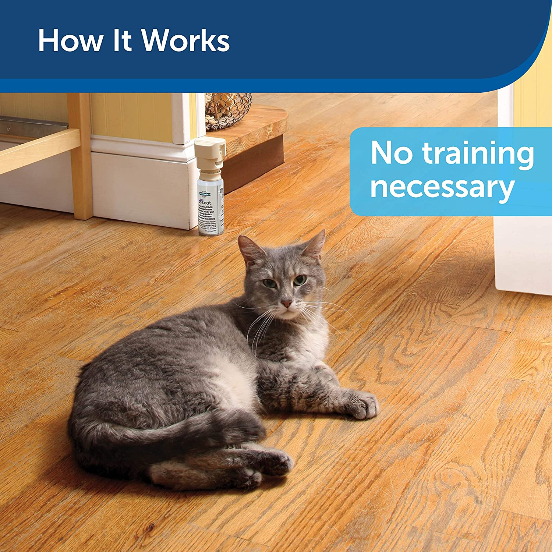 Inexpensive Cat Toys