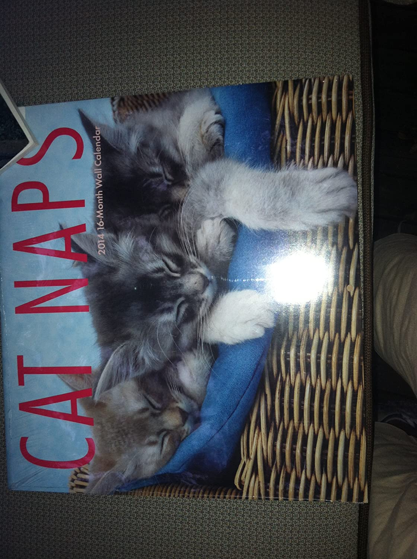 Cat Naps 2014 16 Month Calendar   B00GHM7L9S