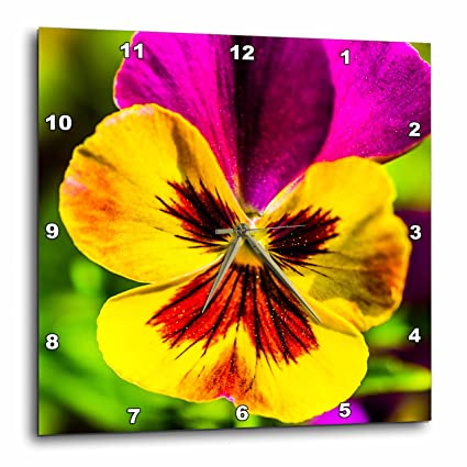 Amazon 3drose alexis photography flowers pansy yellow and 3drose alexis photography flowers pansy yellow and pink pansy flower macro photo mightylinksfo