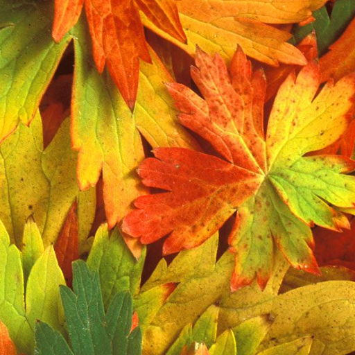 Amazon Com Free Autumn Wallpapers Appstore For Android