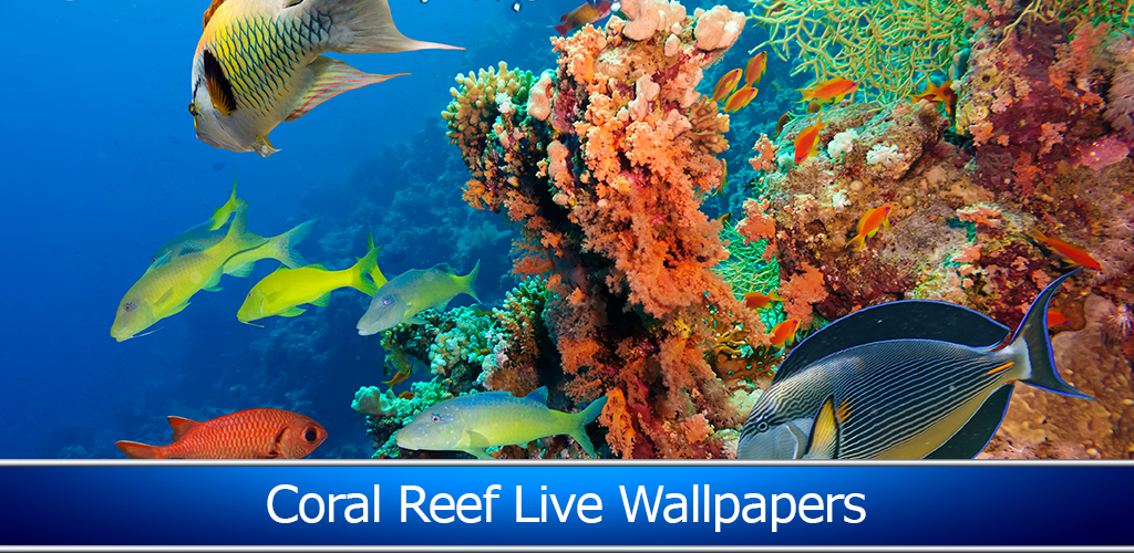 amazon com coral reef live wallpapers appstore for android