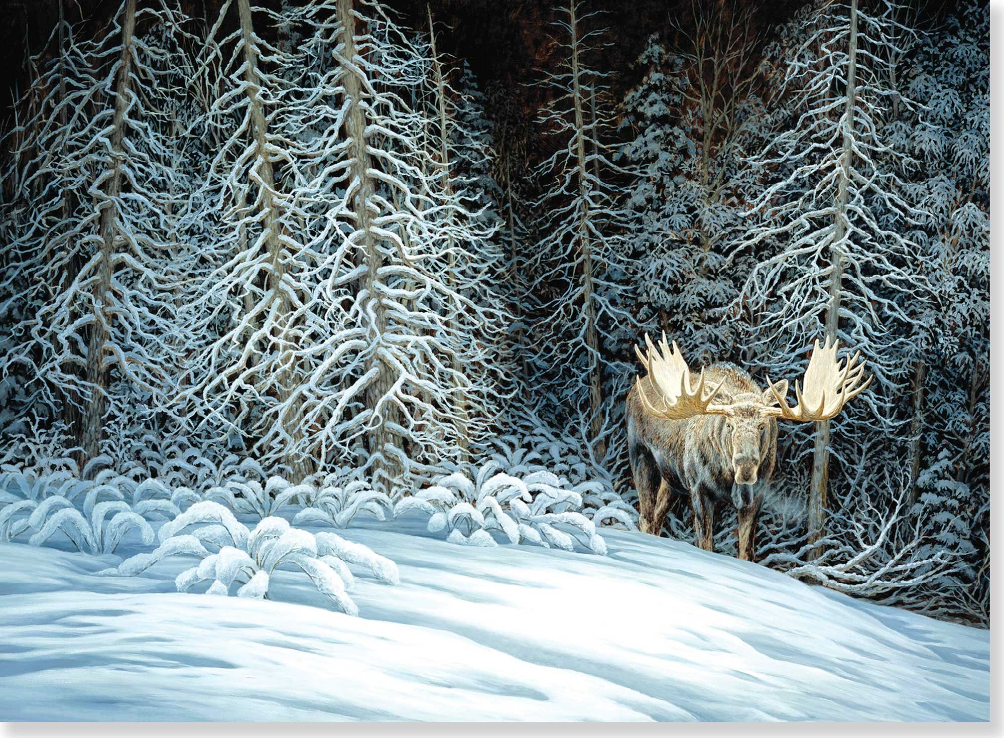 Moose in Moonlight Deluxe Boxed Holiday Cards (Christmas Cards ...