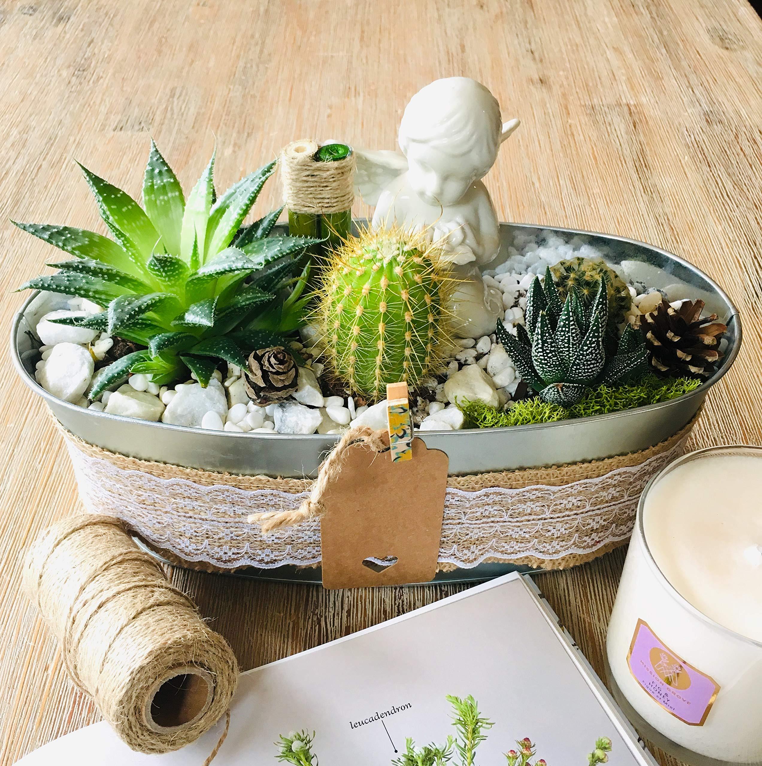 Live Succulent Angel's Garden Arrangement: 1 x 4'' Succulent, 3 x 2'' Succulents/Cacti, Free Gift!!! by Succulent Design Studio (Image #2)