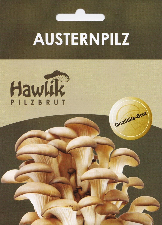 Hawlik Pilzbrut - das Orginal - Austernpilze als Dübel-Brut zum selber züchten - kinderleicht frische Pilze ernten Hawlik Pilzbrut GmbH