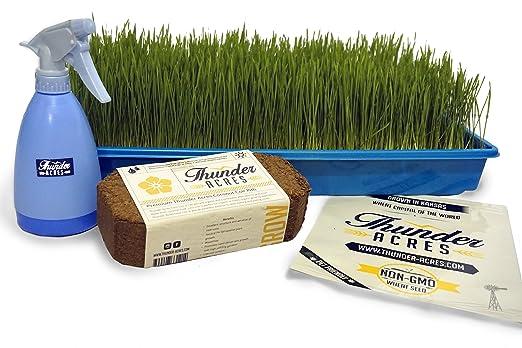 Complete orgánicos germinado Kit de cultivo, bandejas de colores ...