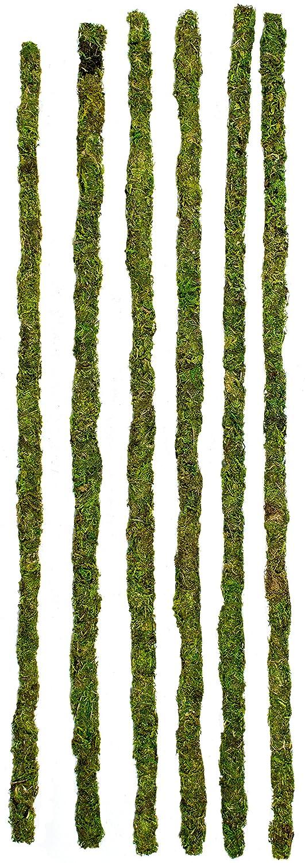 Galapagos Mossy Terrarium Sticks, 6-Pack, 24-Inch 05321