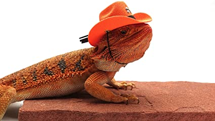 abc3400efe2d5f Image Unavailable. Image not available for. Color: Carolina Designer  Dragons Bearded Dragon Cowboy Hat ...