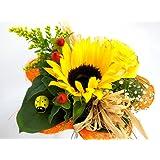 """Blumenstrauß """"Sonnenlicht"""" VERSANDKOSTENFREI + kostenlose Glückwunschkarte"""