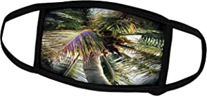 3dRose Abstract Plants - Image of Underneath A Coconut Palm - Face Masks (fm_256241_3)