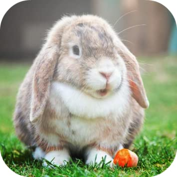 What other items do customers buy after viewing this item? Cute Bunny HD Wallpapers