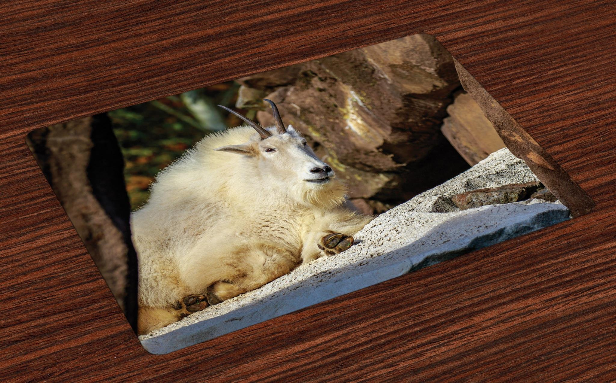 Lunarable Goat Place Mats Set of 4, White Mountain Goat Sunbathing on a Rocky Slope Idyllic North America Scene, Washable Fabric Placemats for Dining Room Kitchen Table Decor, Brown Cream and Grey