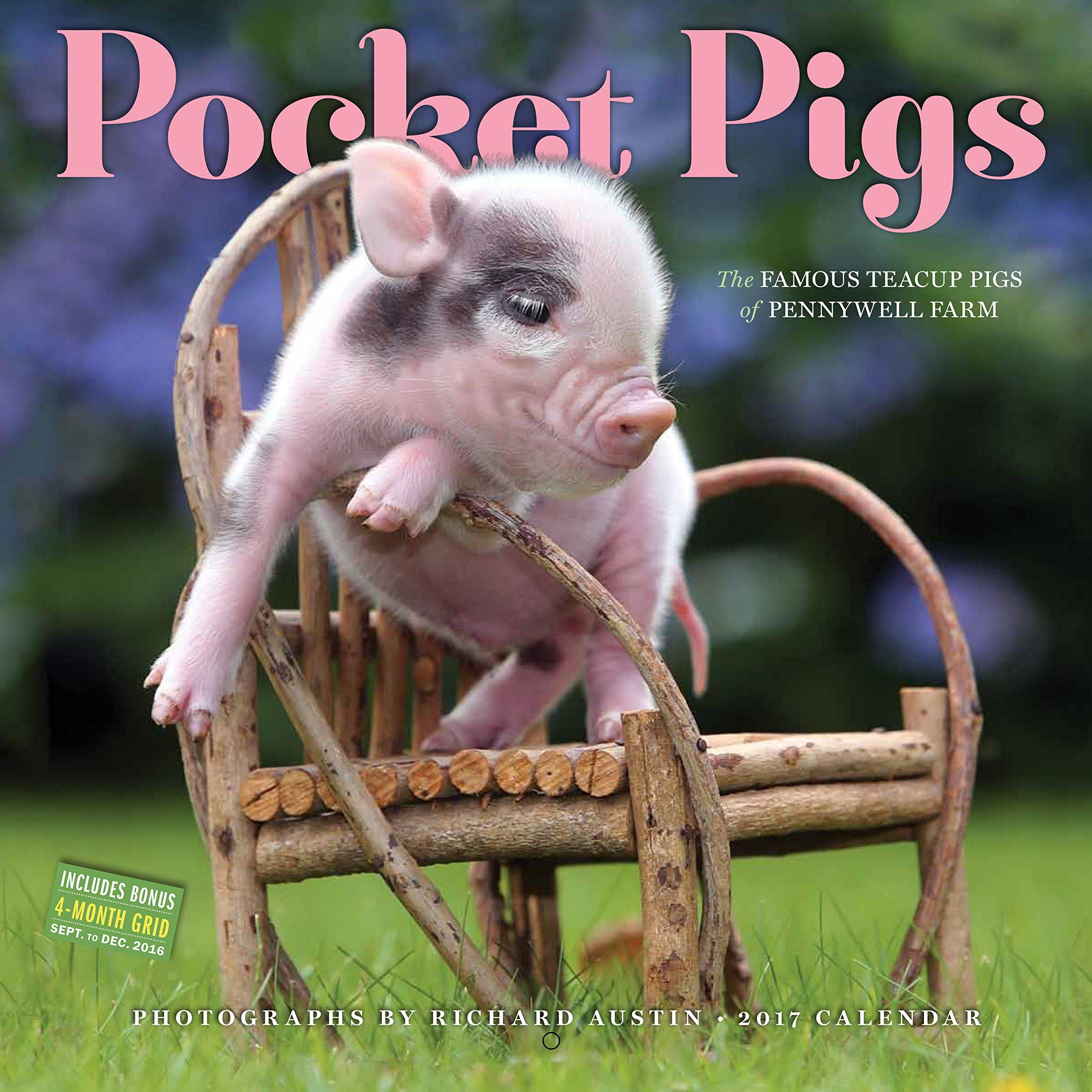Pocket pigs wall calendar 2017 the famous teacup pigs of pennywell pocket pigs wall calendar 2017 the famous teacup pigs of pennywell farm workman publishing richard austin 9780761188049 amazon books voltagebd Choice Image
