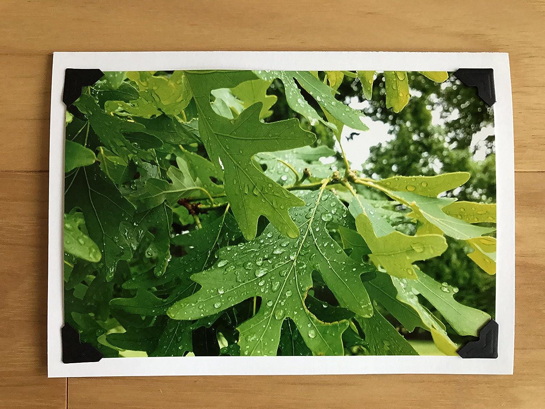 Rainy Oak