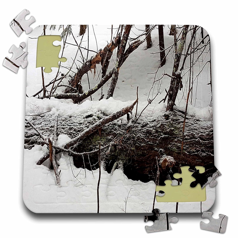 【オープニング 大放出セール】 3drose TDSwhite – 冬季節Nature写真 TDSwhite – Winter Storm – B07FCRX7ZY Snow Coveredツリー – 10 x 10インチパズル( P。_ 284968_ 2 ) B07FCRX7ZY, Select Shop Nose Low:7fac8c00 --- 4x4.lt