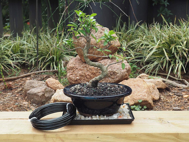 2 mm Cada tama/ño Mide 10 m 3 tama/ños Alambre de jard/ín Negro para Dar Forma al /árbol bons/ái 1,5 mm Aluminio Alambre de Entrenamiento para /árbol bons/ái 1 mm Victory-eu