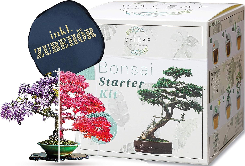 Valeaf Bonsai Starter Kit - SUMMER SALE - criar su propio Bonsai árbol - Anzuchtset incluida 4 variedades de semillas Bonsai & accesorios - para principiantes - el regalo ideal para el árbol plant