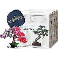 valeaf Bonsai Starter Kit - Summer Sale - Cultiva tu propio árbol bonsái - Juego de cultivo con 4 tipos de semillas de…