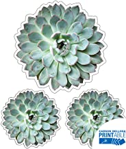 Printable Succulent Cutouts