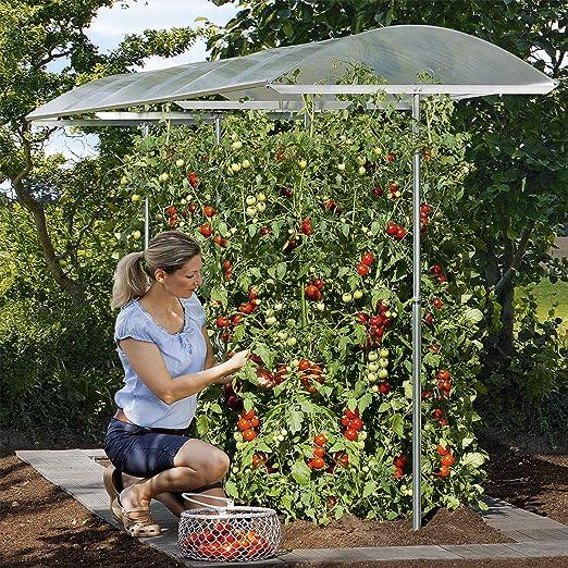 Beckmann PSN3 - Techo protector para plantas con doble plancha (tamaño 3): Amazon.es: Jardín