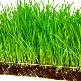 """Microgreen Organic Wheatgrass 3 Pack Refill – Pre-measured Soil + Seed, Use with Window Garden Multi-Use 15"""" x 6"""" Planter Tray. Easy and Convenient, Enough to Sprout 3 Crops of Superfood."""