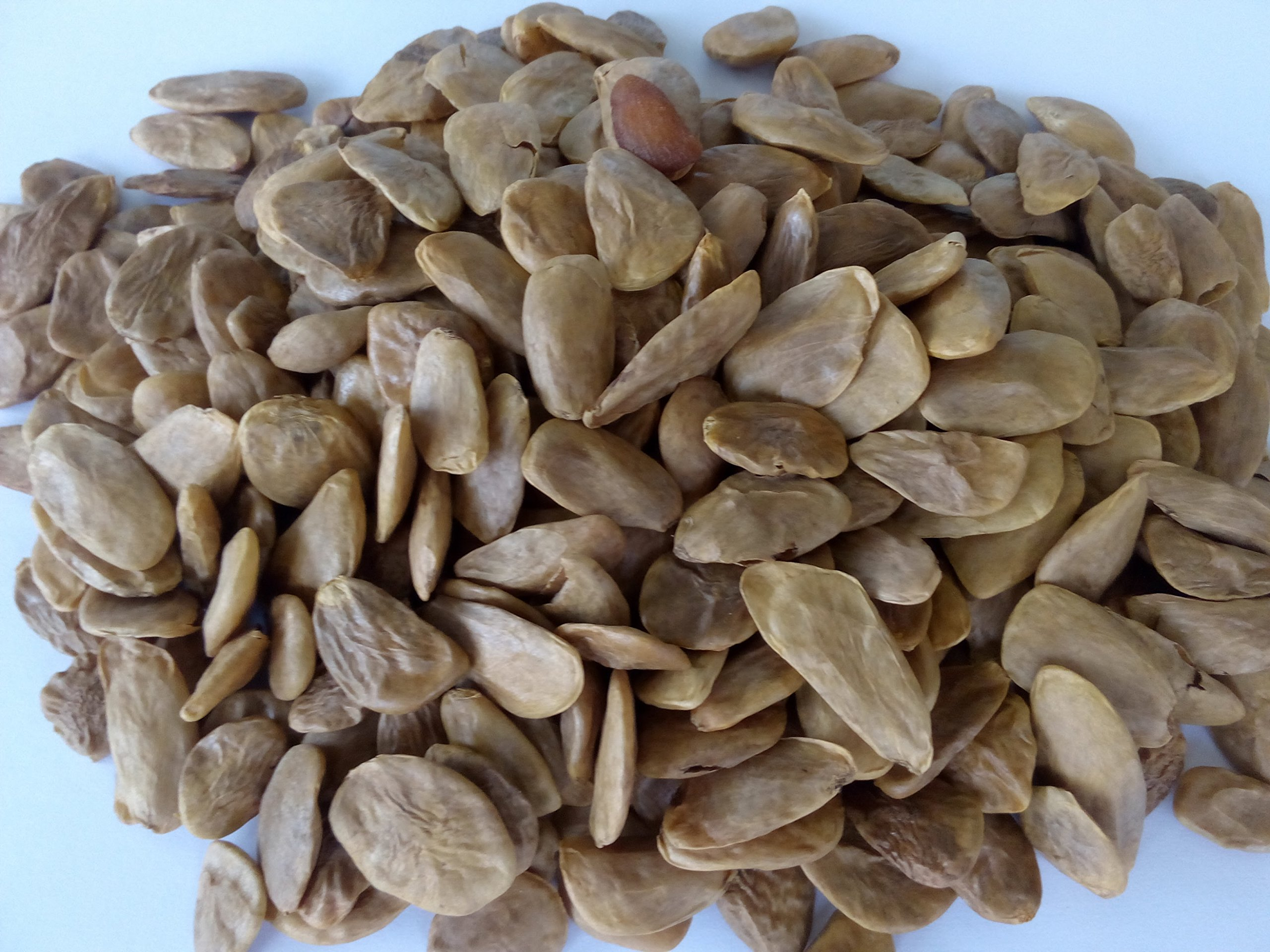Akuamma (Picralima Nitida) Seeds 1000g