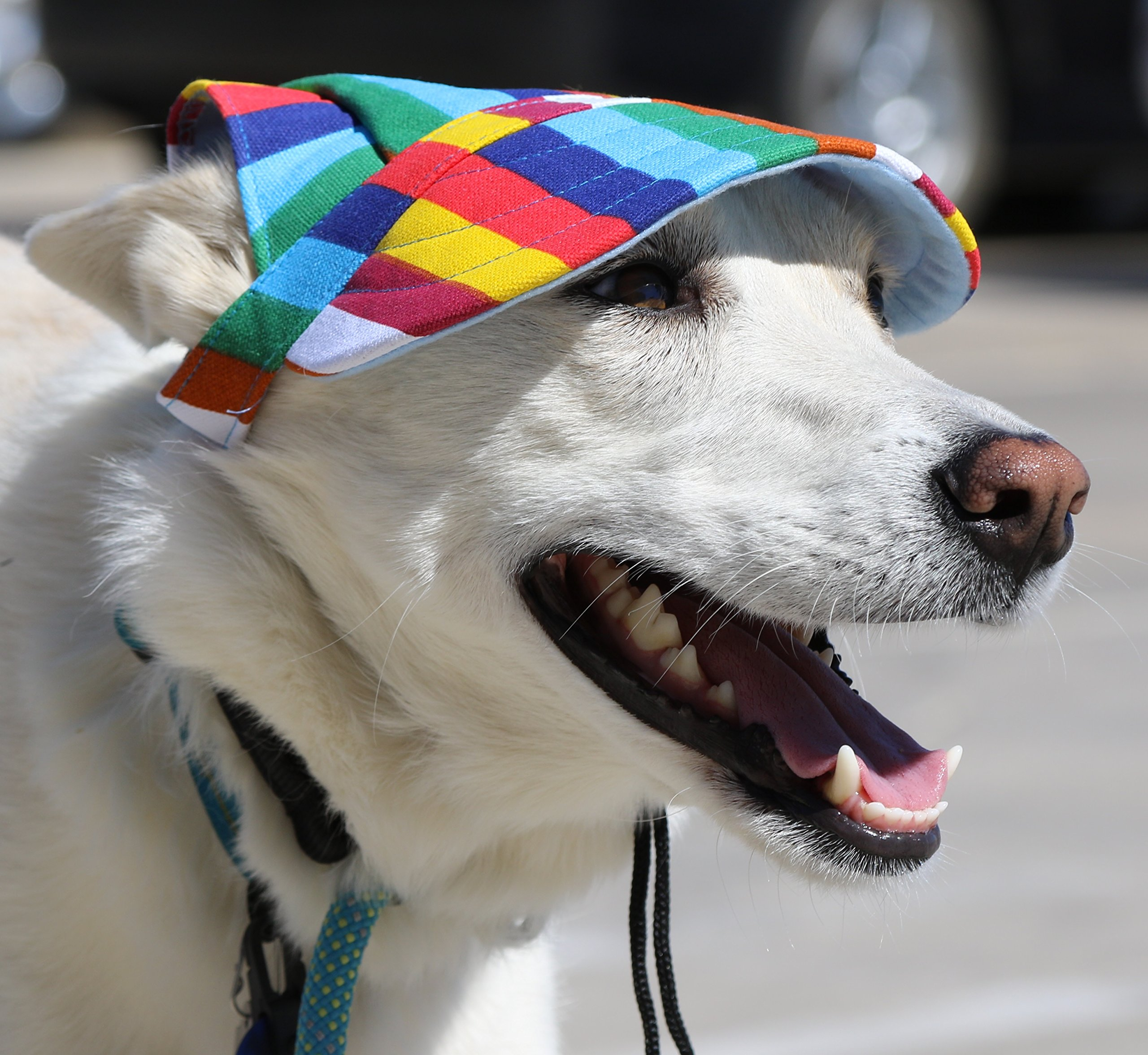 LoveWally Dog Outdoor PET Hat Rainbow ♦ Adjustable Authentic (Large) by LoveWally (Image #8)