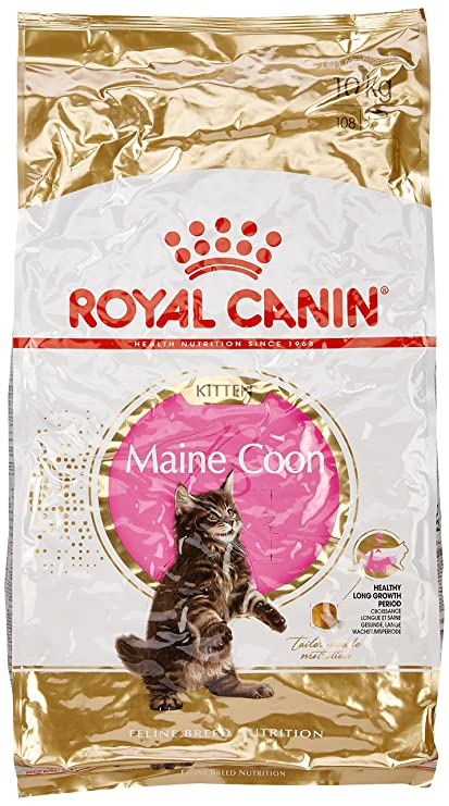 Royal Canin Comida para gatos Kitten Maine Coon 10 Kg: Amazon.es: Productos para mascotas