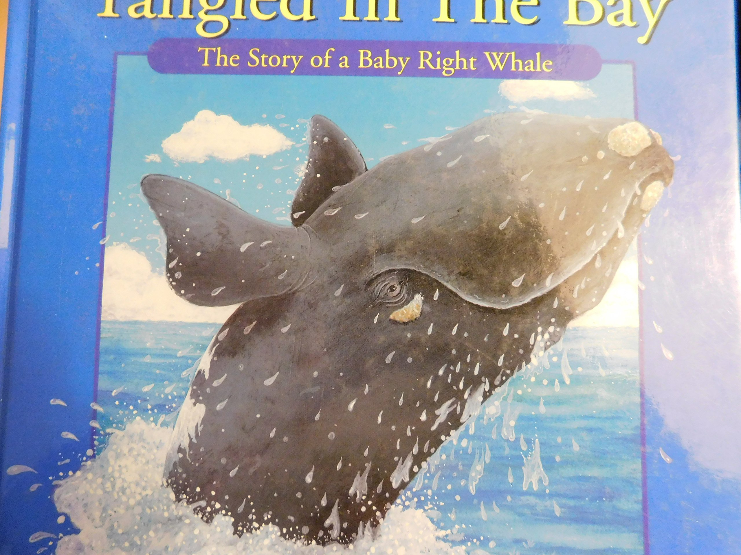 Tangled in the Bay: The Story of a Northern Right Whale Calf pdf