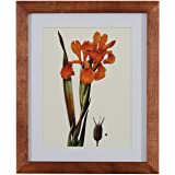 "Amazon Brand – Stone & Beam Modern Orange Floral Print Wall Art, Weathered Brown Frame, 14.25"" x 17.25"""