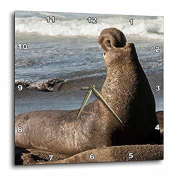 amazon com danita delimont seals california san simeon