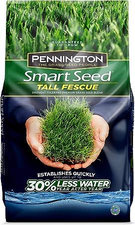 Amazon.com: Pennington 100526675 Smart Tall Fescue ...