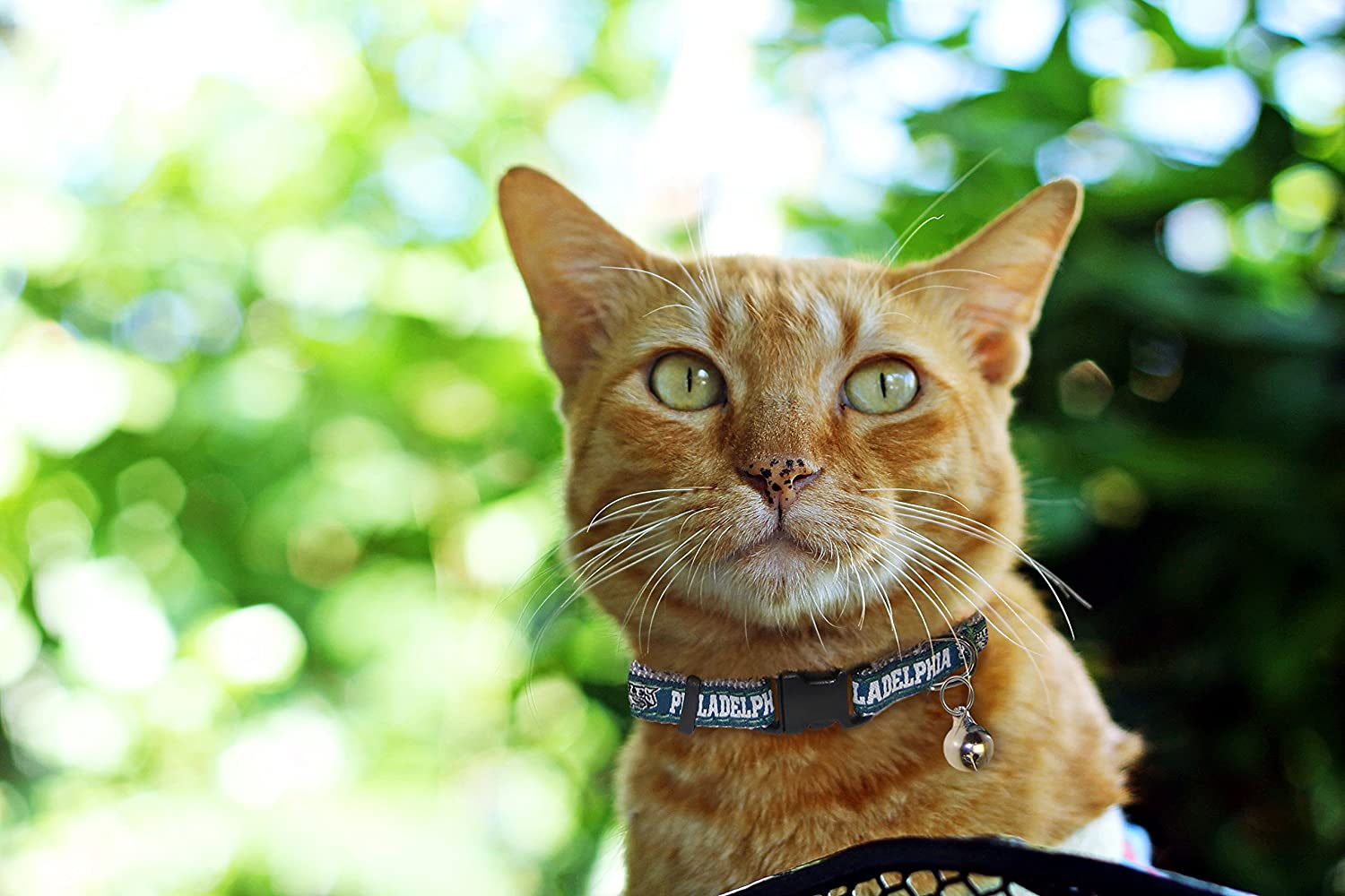 Amazon.com   Pets First NFL CAT Collar. - Philadelphia Eagles CAT Collar. -  Strong   Adjustable Football Cat Collars with Metal Jingle Bell   Pet  Supplies 6e8ccbbc9