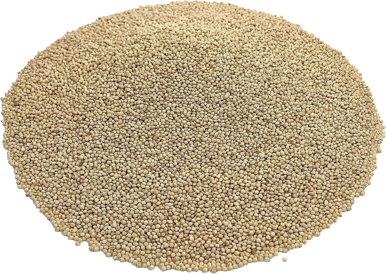 White Proso Millet Seed Bird Feed 10lb Bulk Bag