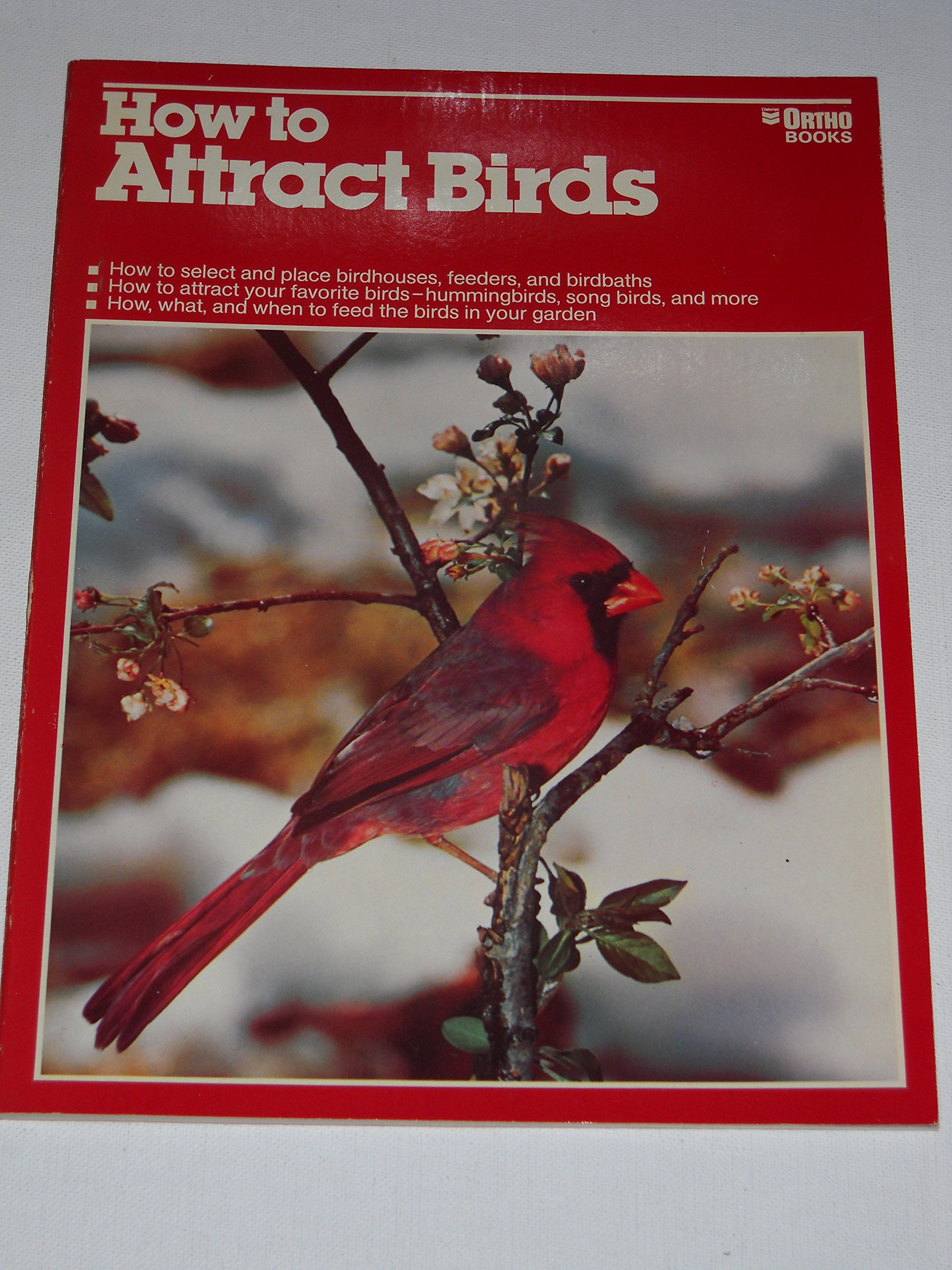 How to Attract Birds, Michael McKinley