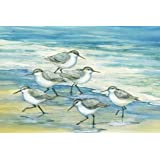 Portfolio Canvas Décor 'Surfside Sandpipers' by Paul Brent  24x36x1.5, 1 Piece Canvas Wall Art