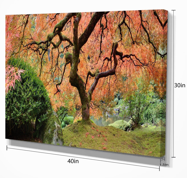 Amazon Com Old Japanese Maple Tree Landscape Photography Canvas Art Print Posters Prints