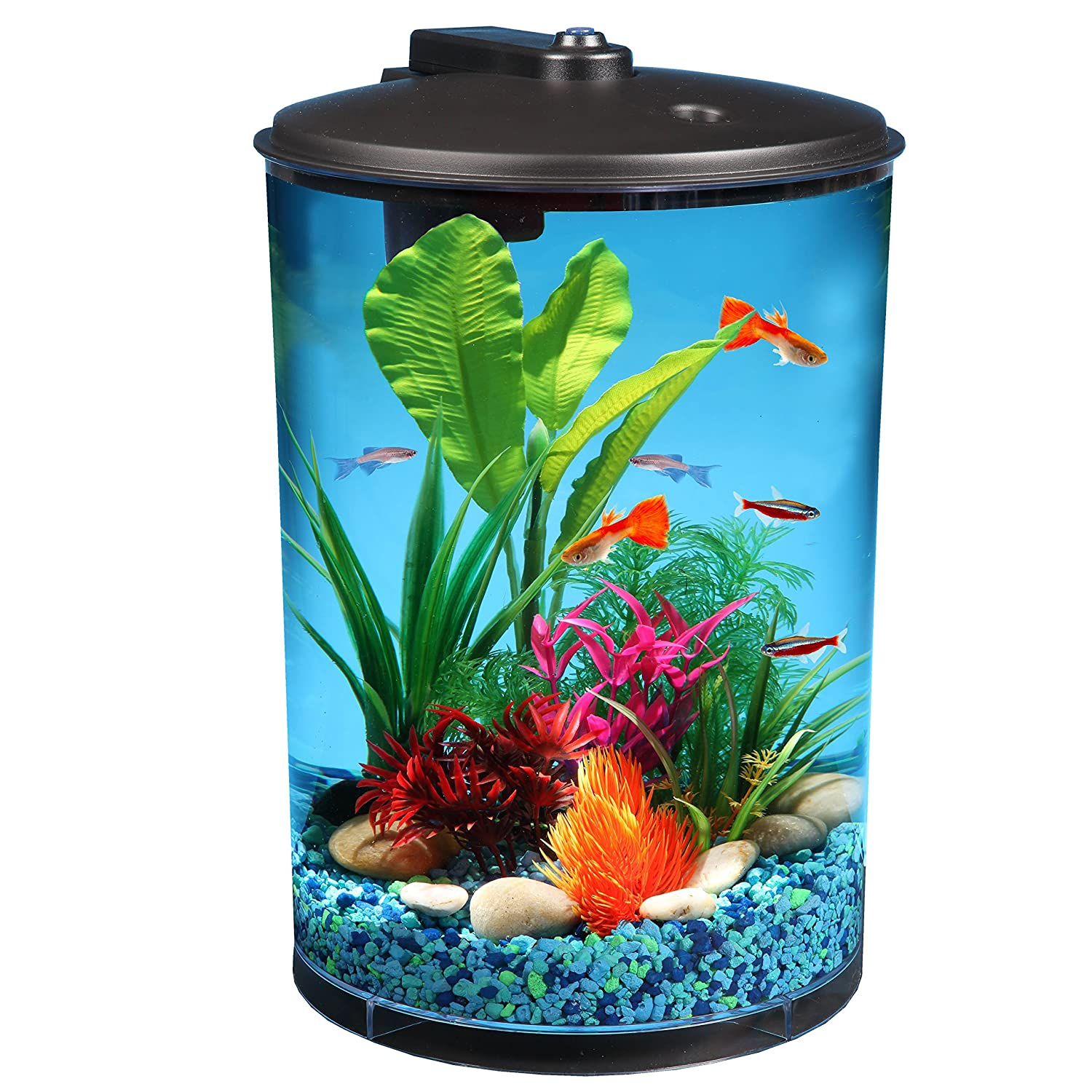 Amazon.com : AquaView 3-Gallon 360 with Power Filter and LED ...